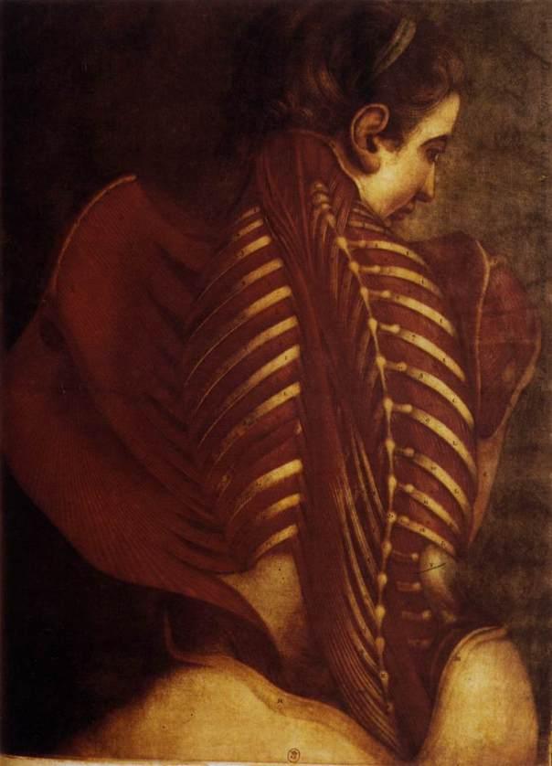Jacques-Fabien Gautier-d'agoty (Back of Female) 1746